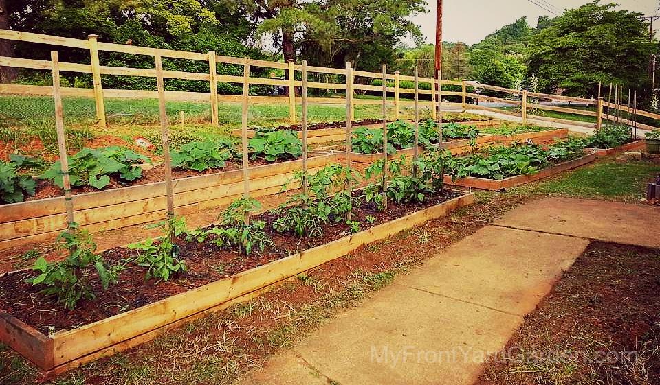 My Front Yard Garden